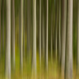 Forrest abstract (2/6)