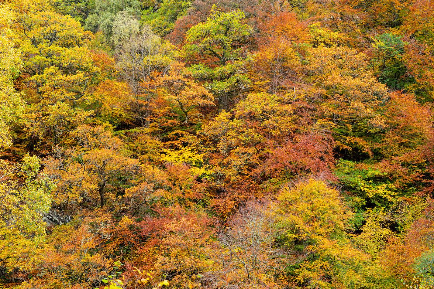 Autumn trees Perthshire