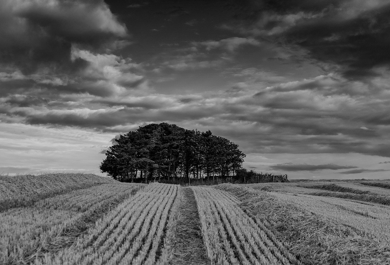 Fields of Fife