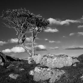 Braes - Lone tree