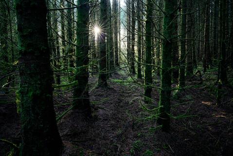 Forest light Lochaber