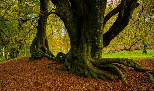 Highland forest 2