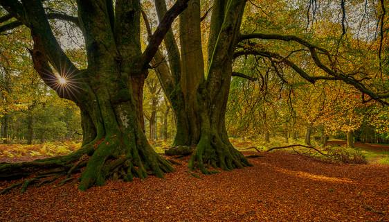 Highland autmn Forest 1