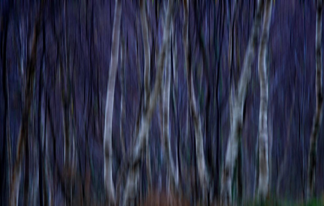 Autumn Birch abstract