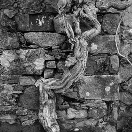 Dead tree Skye