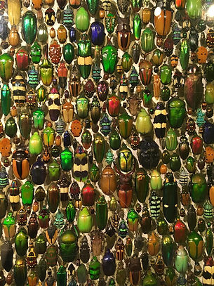 Insectes.jpg