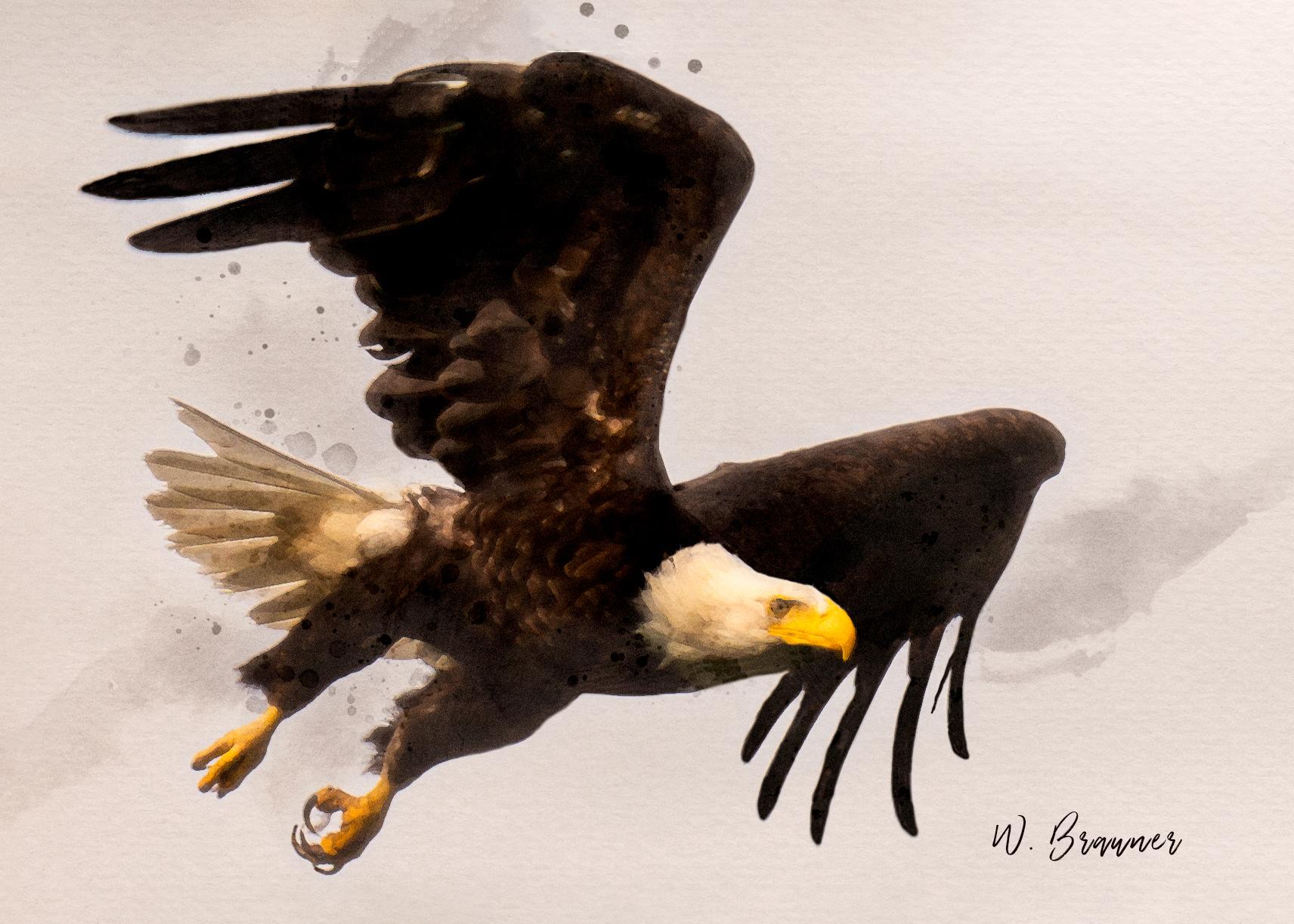 Bald Eagle on Attack