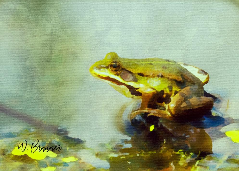 Western Bull Frog