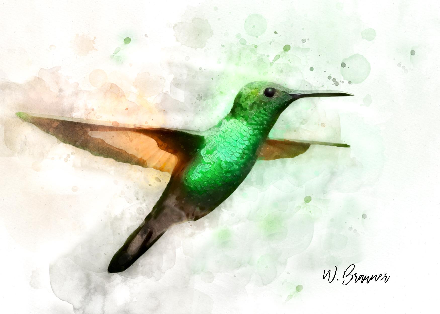 Green Throated Hummingbird