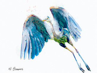 Herons/Egrets