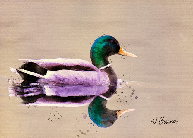 Mallard Duck, Canby, Oregon