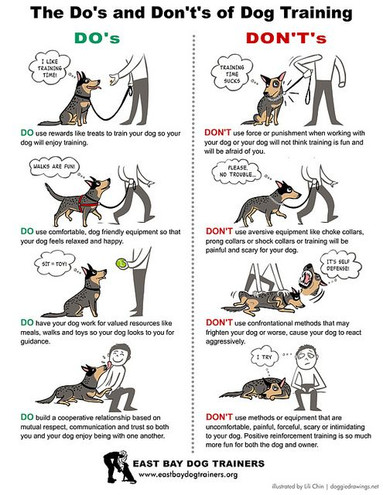 Do's & Dont's of Dog Training