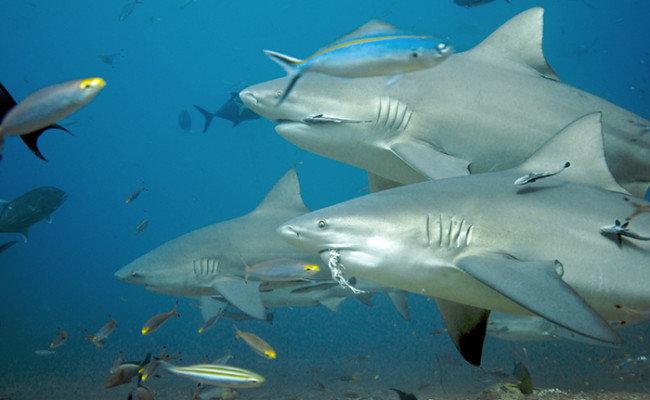 Aqua Trek Beqa, Fiji