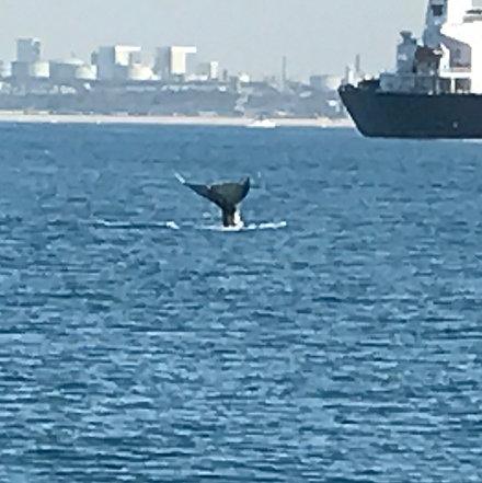 Whale watching charter marina del rey for Deep sea fishing marina del rey