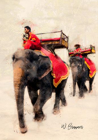 Asia Elephants, Cambodia