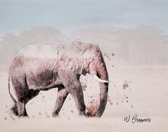 Bull Elephant, East Africa