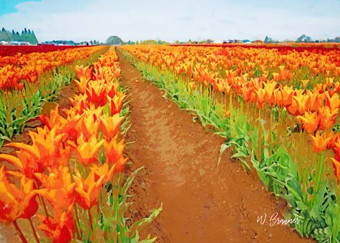 Orange Tulip Rows