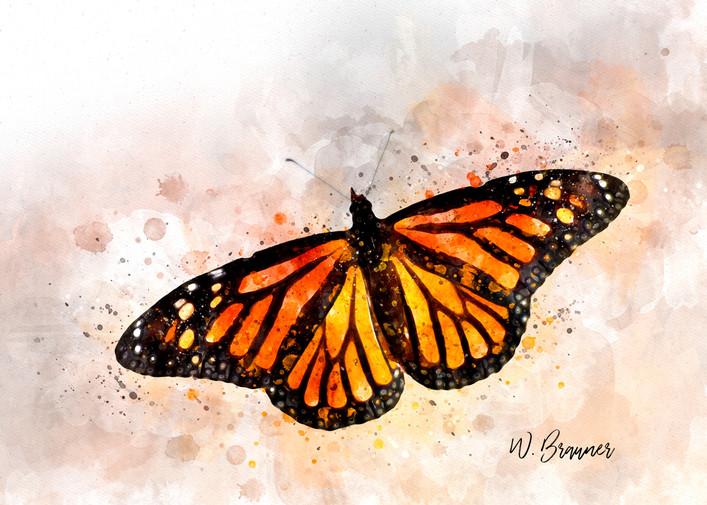 Resting Monarch Butterfly II