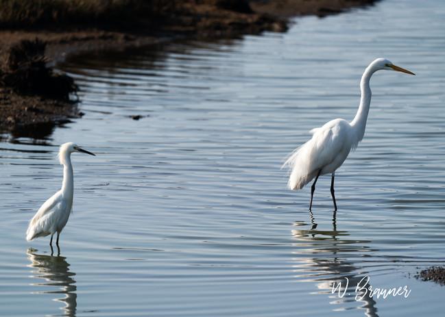 White Heron Team, Huntington Beach, CA