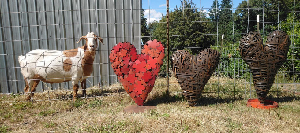 buck 3 hearts 2018 copy.jpeg