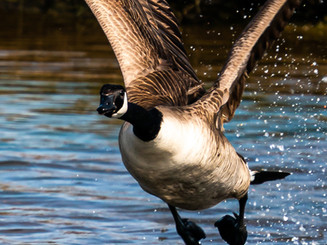 Birds/Wildlife