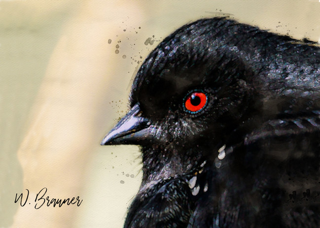 Black Bird Red Eye