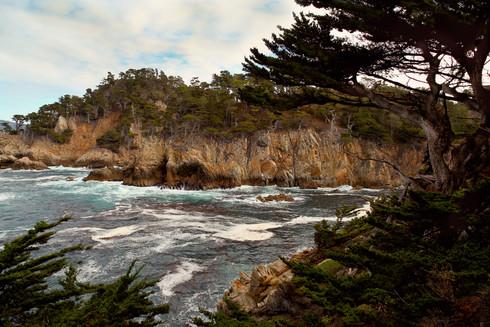 Point-Lobos.jpg
