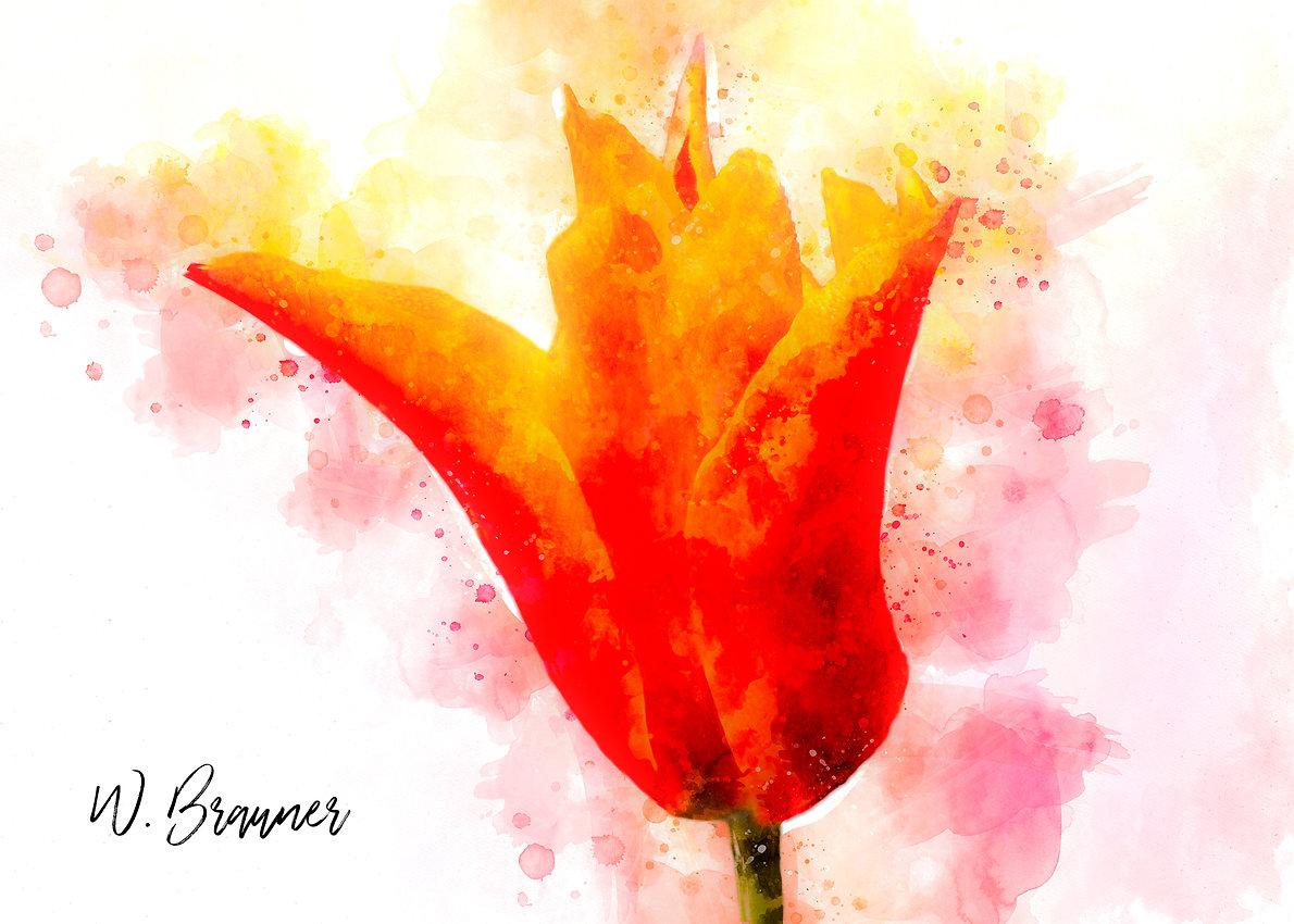 Tulip watercolor.jpg