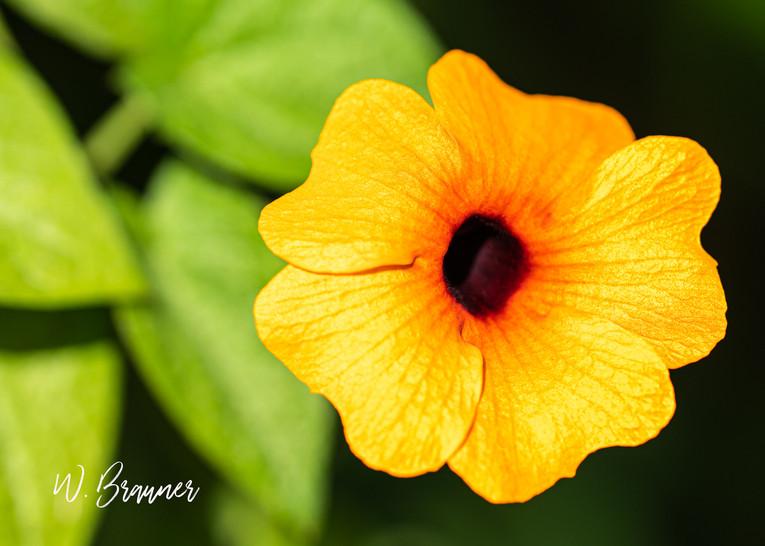 Orange Flower, Joshua Tree, CA