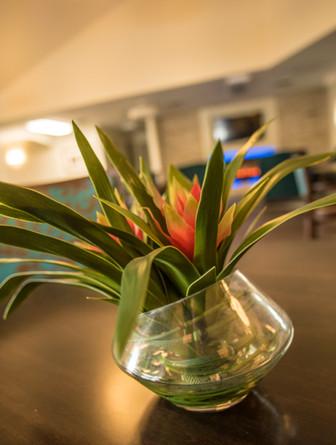 lobby plant 1.jpg