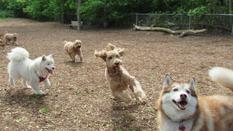 5 Tips For The Dog Park (To Keep Everyone Happy And Safe)