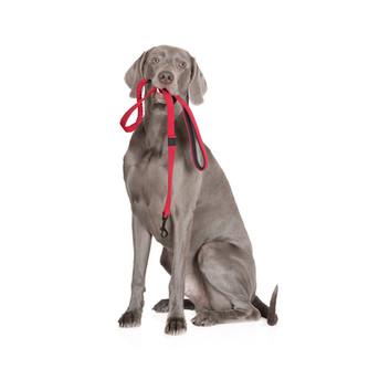TEACH YOUR DOG TO WALK ON-LEASH