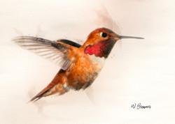 Rufous Male Hummingbird