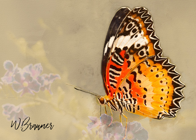 Orange Varigated Butterfly