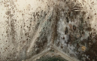 Mold Damage Repair & Removal Yakima