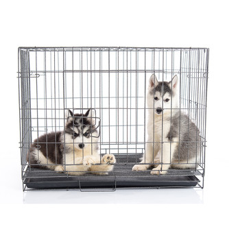 CRATE TRAINING YOUR PUP