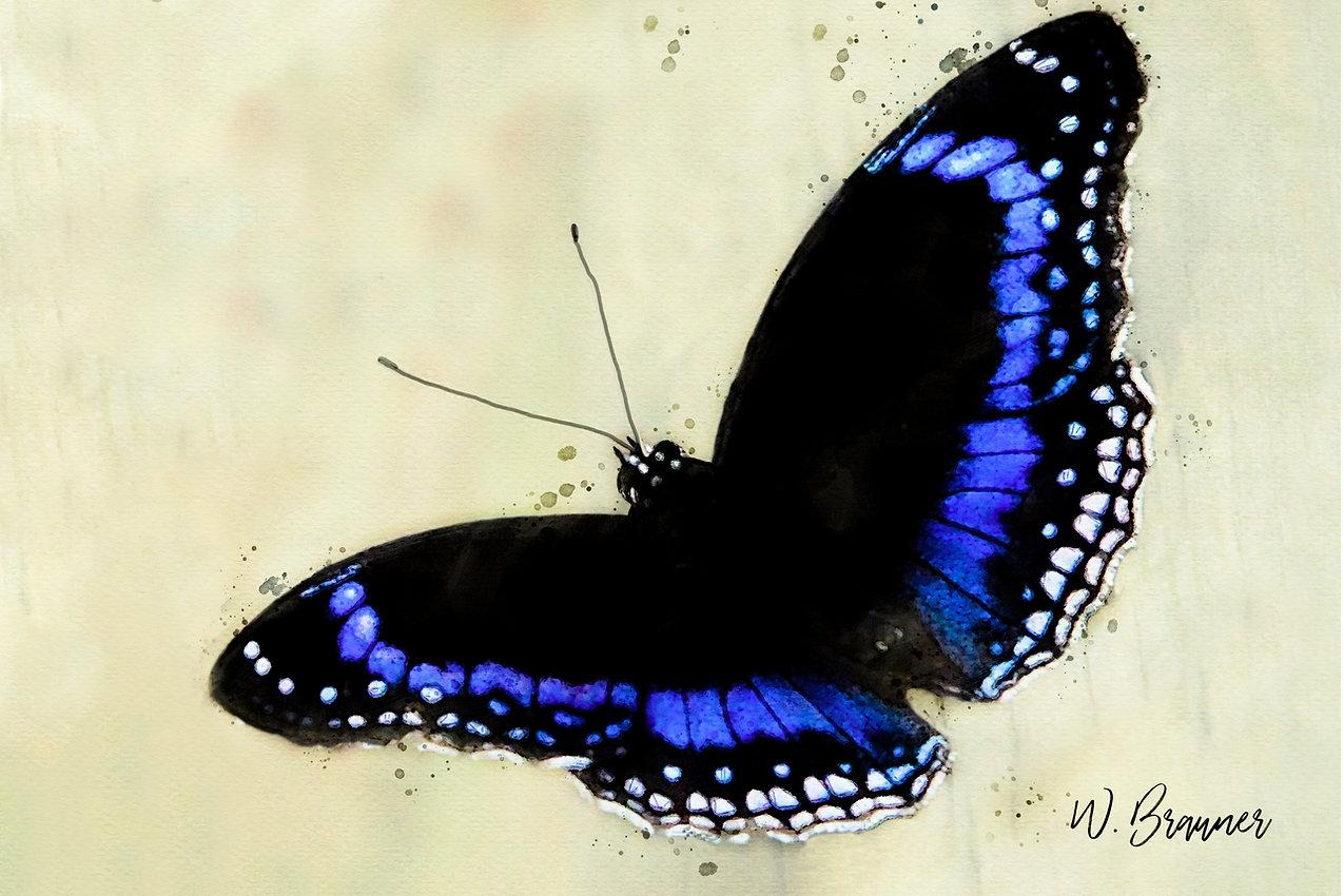 Blue backed butterfly watercolor.jpg