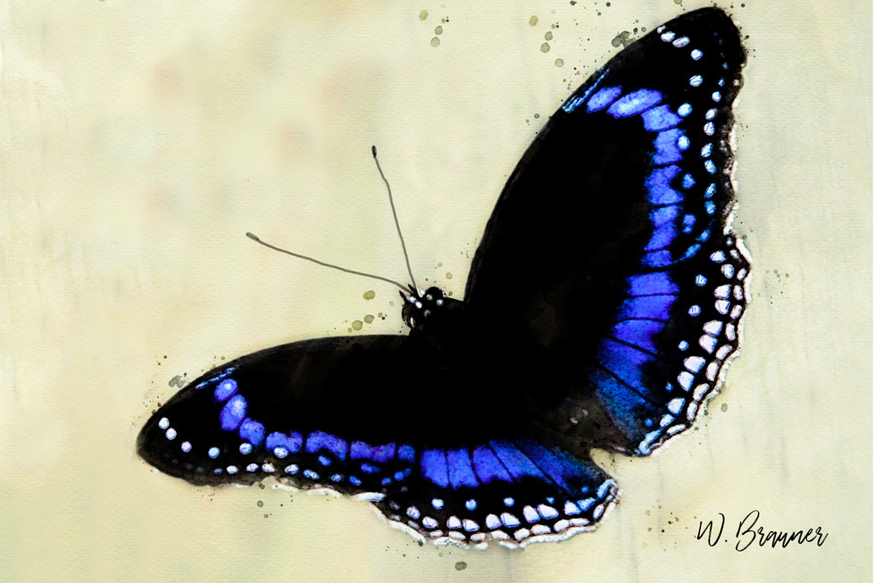 Blue backed butterfly watercolor.jpg