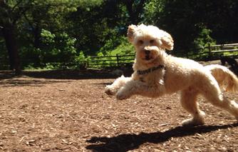 Dog Recall Fundamentals