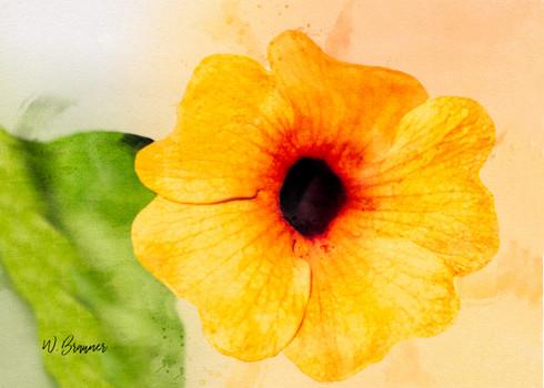 Yellow Flower, Joshua Tree Park