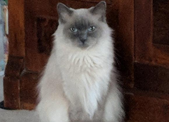 Misty-Retired Queen