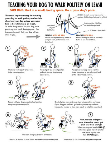 Teach your Dog to Walk Politely on a Leash