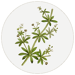 cleavers.png