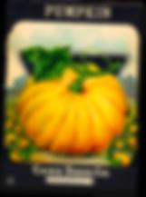 washington state family farms, snohomish pumpkin patch, stocker farms pumpkin patch, baileys pumpkin patch, pumpkin hurl snohomish, medieval faire snohomish, pumpkin festival washington