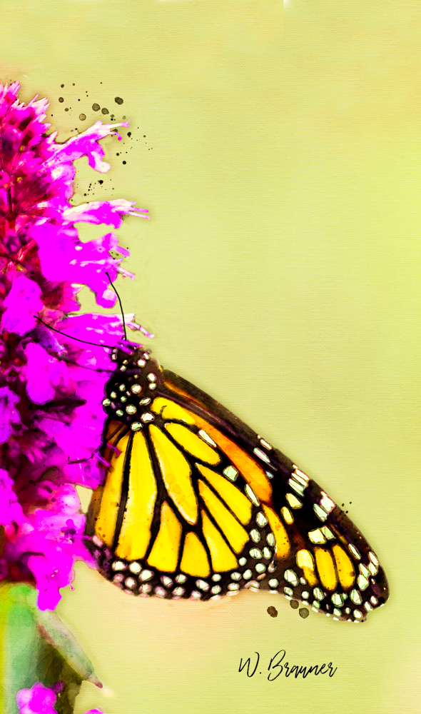 Monarch on Purple Flower-Watercolor