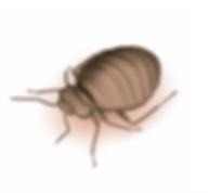 California bedbug inspection, bedbug dogs, bedbug detection, canine bed bug detection, bed bug dogs, bed bug detector, find bed bugs, get rid of bed bugs, about bed bugs, detect bed bugs, bed bug inspection cost, bed bug inspection, canine bed bug