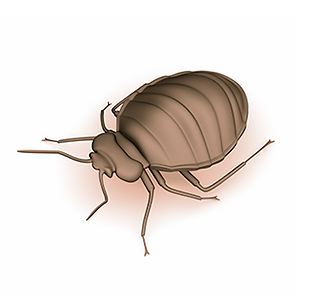 California bedbug inspection, bedbug dogs, bedbug detection, canine bed bug detection, bed bug dogs, bed bug detector, find bed bugs, get rid of bed bugs, about bed bugs, detect bed bugs, bed bug inspection cost, bed bug inspection, canine bed bug