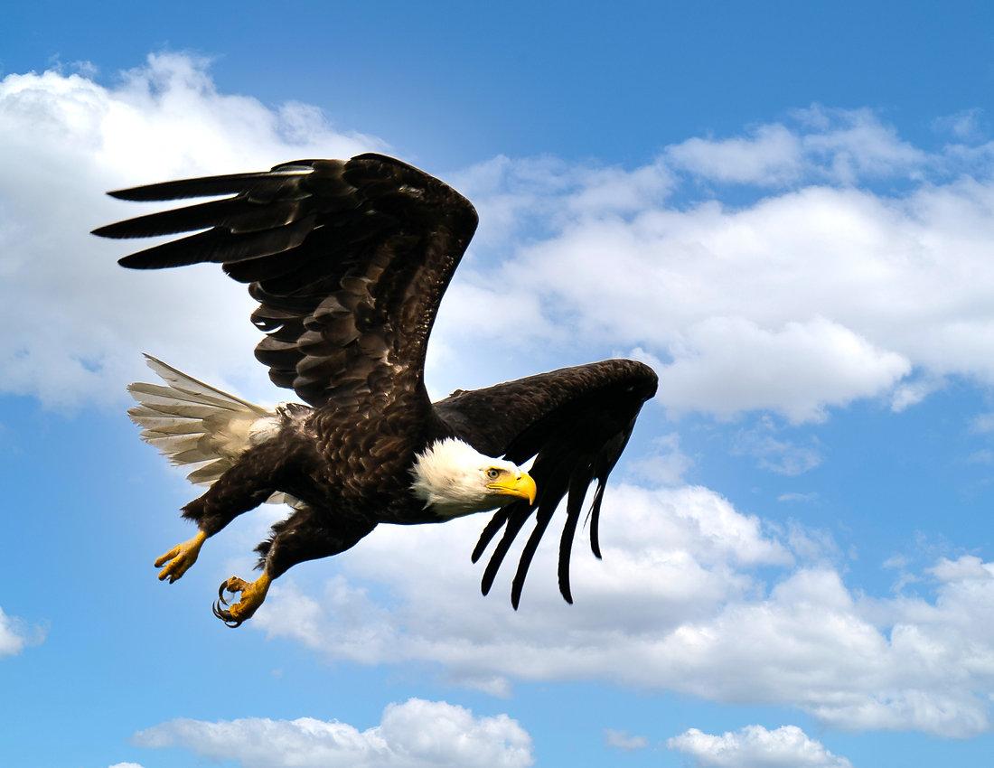 Bald Eagle Photo.jpg
