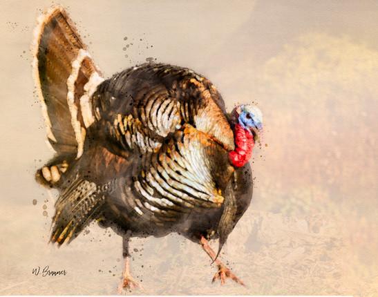Big Tom Turkey