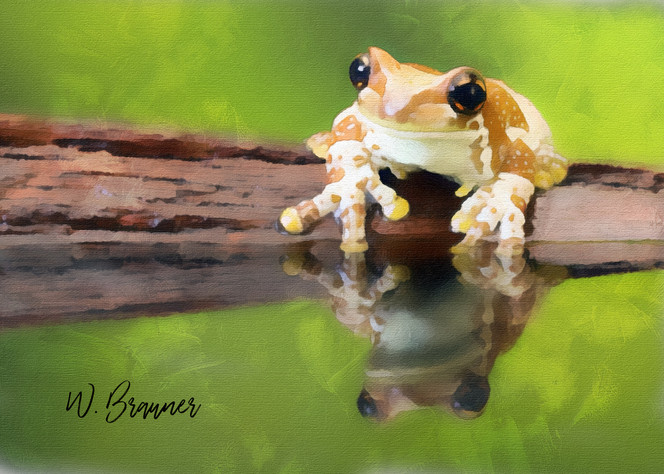 Curious the Frog